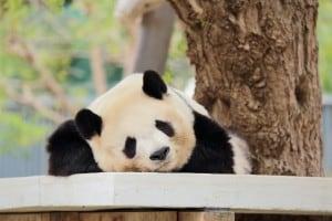 中国のイメージ画像。